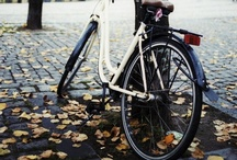 Cycling for All Seasons