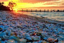 Sanibel Island Sunsets / Magical Sunsets of Sanibel island, Florida as a beautiful back drop for shells. #seashells #sunset #sanibel