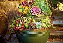 Flowers/Plants/Gardening