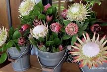 Flowers ~ les fleurs ~ Blomme