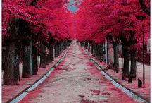 Pathways and Doors / by Zachira Castro