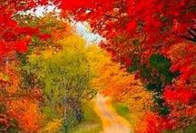 Fall! / by Laura Cook