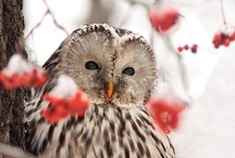 Owls are wise!! / by Laura Cook