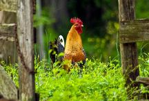 A Farm Life / by Tam