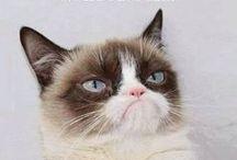 Grumpy Cat Love :)