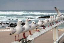 Sea, Sand, Surf & Sea Gulls