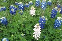 So Texas / by Sara Jane Howell