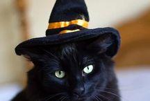 Halloween / by Lauren Blackwell