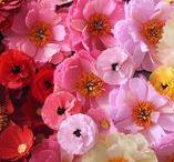 A Petal Unfolds Paper Flowers / My paper flowers