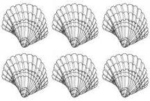 Seashells Illustration / Seashell Study-Pen Illustration