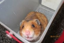 Hamsters / The cutest animal ever! / by Zohar Peltzman