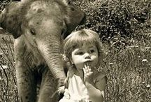Angie's Elephants <3 / by Tracy Bolek