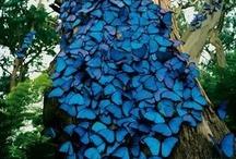 Love is Blue / by Sue Ballard