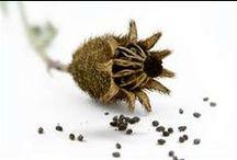 Botanic: seeds
