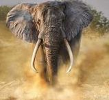 Enchanting Elephants / Elephants