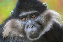 Playful Primates / Primates - monkeys and apes