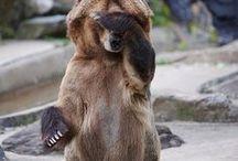 Beautiful Bears / Bears