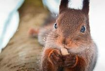 Super Squirrels / Squirrel Love! Photos, art and gifts for squirrel fans.