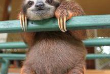 Sensational Sloths