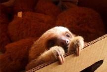 sloths / by Alyssa Landa