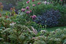 Gardens & Woods