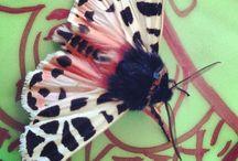 moths/butterflies / by Alyssa Landa