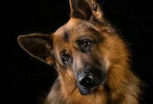 Dogs / Please be kind and just Love us...is all we ask...J