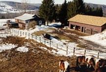 Farms / by Betty Hicks