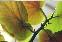 plants/nature / by Alyssa Landa