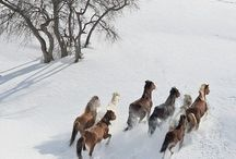 Magical, Beautiful Horses / These are one of the most spiritual Animals that are here to heal and teach us how to overcome trauma and diversity...They are one of the most Magical, insightful Living Spirits that will capture our hearts if we just open ourselves up and allow it...J