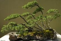 Trees ~ Bonsai / by Barbara Ford