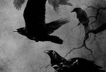 Photo's in Sepia,Black, Greys & White & a bit of Colour...