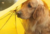 Rain & Umbrella's  & some colour...