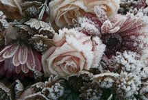 Winters Frost and Ice...