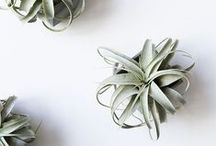 decor * plants