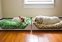 Pooches / by Ruby-Roux Photography