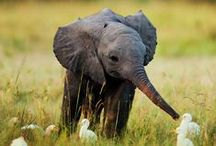 Elephant Obsession / by Ashley Bodley