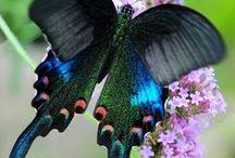 Стрекозы, бабочки, птицы