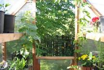 Garden: Greenhouses, Cold Frames & Other Season Extenders / Filled with an array of ideas to help extend the gardening season - from simple DIY ideas that may not be pretty to gorgeous greenhouses.