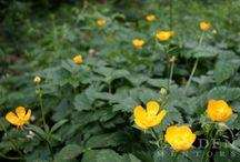Garden: Weeds & Weeding / Garden Weeds and weeding