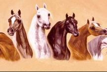 Arabian Horses / by Carol Hayes