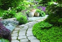 Garden Inspirations / by Lisa Ziccarelli