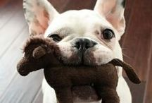 These Are a Few of Our Favorite Breeds ... / by Dogster & Catster