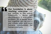 We Are Their Voice / Amazing stories of rescue and hope. / by Dogster & Catster