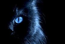 Black & Blue / Blu e nero sono l'accoppiata vincente dell'Autunno Inverno 2012-2013: scoprite la nostra moodboard di outfit e inspiration pura!