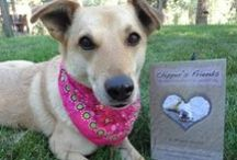 Amazing Dog Stories / Read about our Monday Miracles and Dogster Heroes here.  / by Dogster