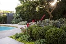 classic modern / client wants a clean traditional low maintenance garden