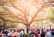 wedding wonderland / by Jessica Lucas