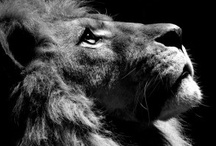 King of the Jungle / by Crystal T.