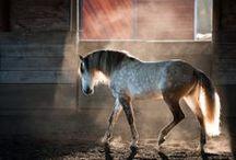 Pferde/Sophia